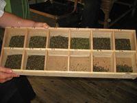 sortowanie herbaty - sklep kimvita